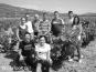 Vergel Tinto Alicante DO 2016/2017 Pinoso Biowein
