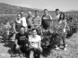 Cepa 50 Monastrell Alicante DO 2015/2016 Pinoso