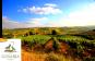 Bucefalo Pinot Grigio Vino da uve appassite Lunaria Bio